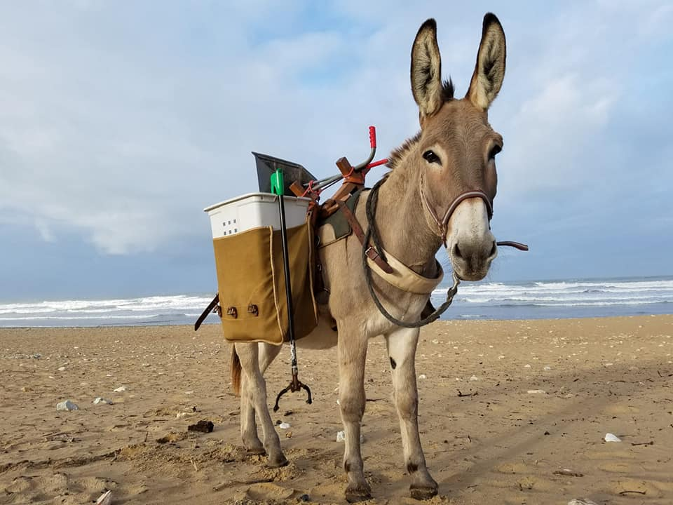 Venez participer au nettoyage des plages de l'île d'Oléron : les dates !