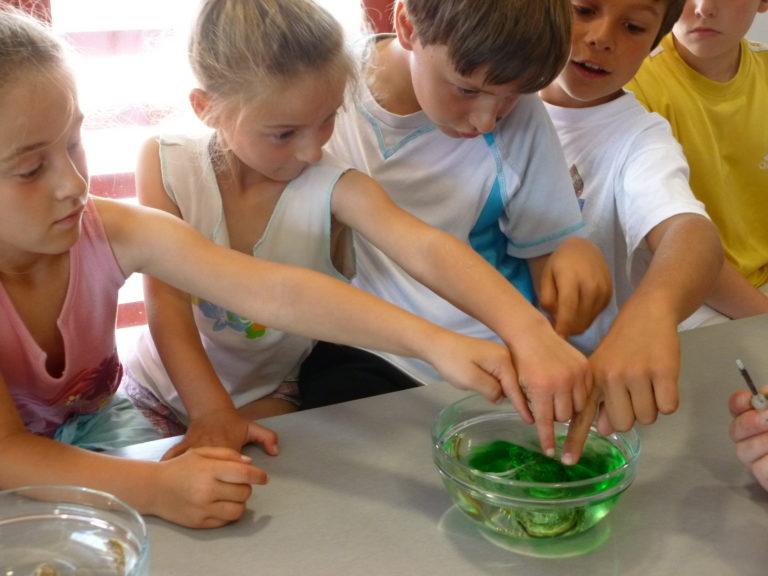 Atelier pour toute la famille sur la biologie les jeudis 28 octobre et 4 novembre à Marennes-Hiers-Brouage